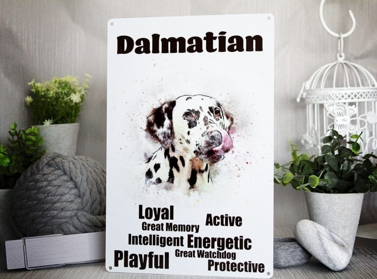 Water colour dalmatian metal sign