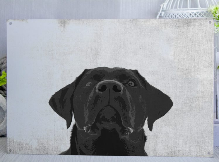 Metal Sgn with a Black Labrador looking upwards