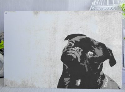 Black pug puppy with his head tilted posterised metal sign